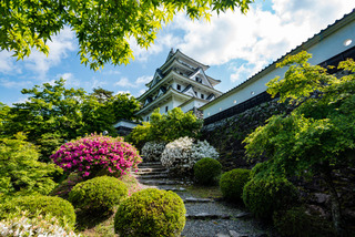 castle_flowers.jpg